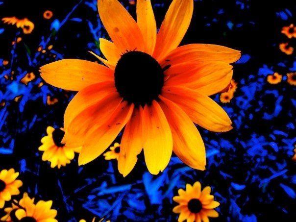 color splash spring photography nature flower