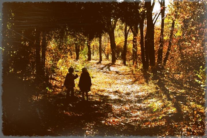 how to take photos in autumn