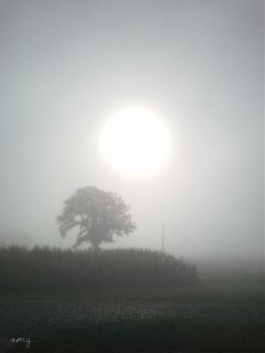 black & white nature photography rain fog