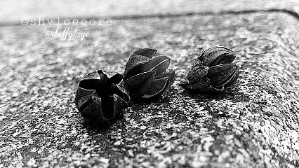 winter traveltreasures black & white
