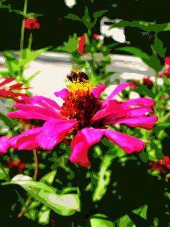 photography nature summer flower bee wappostereffect