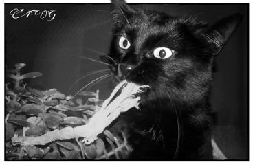 photography emotions pets & animals nature black & white