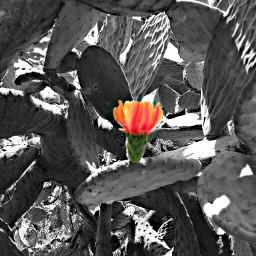 nature color splash flower travel black & white