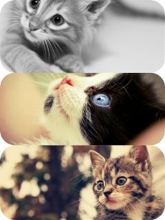 cats colorful love them