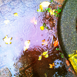 rain water holland nature autumn