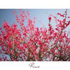 flower japan nature photography sky