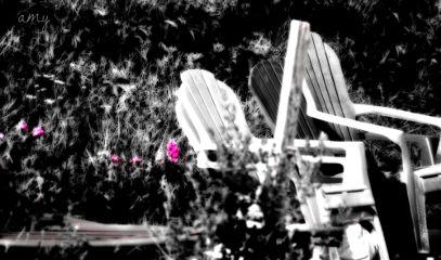 black & white color splash flower nature photography
