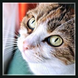 pets & animals cute cat