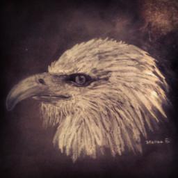 black & white pencil art animal art drawing
