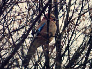 macro nature pets & animals birds