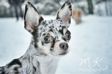nature photography pets & animals cute winter
