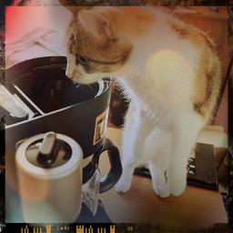 cute cat pets & animals
