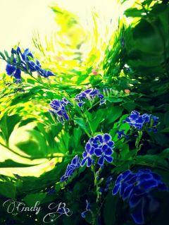 wapfisheyeeffect flower nature photography summer