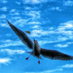 travel pets & animals photography nature lacke