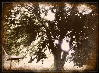 tree outside effect summer retro