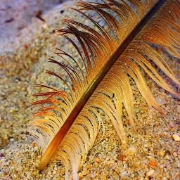 beach feather photography