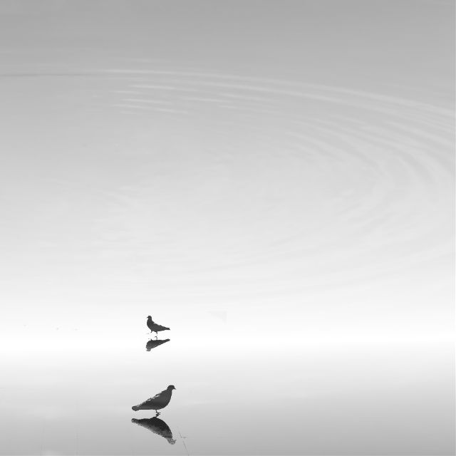 minimalist photography art