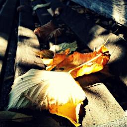 autumn nature emotions