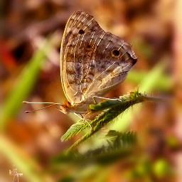butterfly nature macro photography funnzyfam